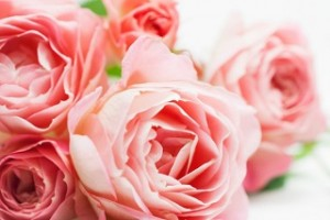 mt-floral